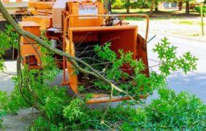 Stump Grinding Jacksonville Beach FL