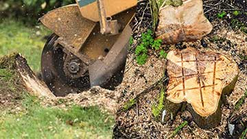 Stump Grinding And Stump Removal Pros And Cons
