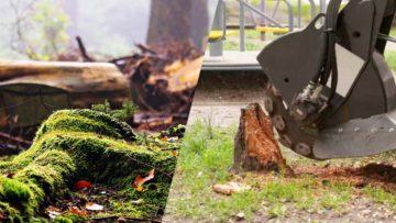 Stump Grinding Vs Stump Removal
